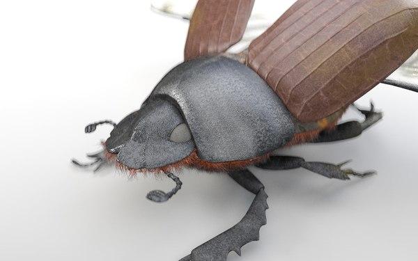 3D dung beetle bee