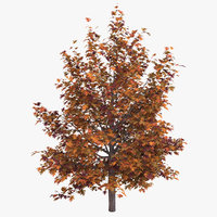 3D model oak tree autumn