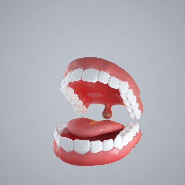 mouth teeth dentition model