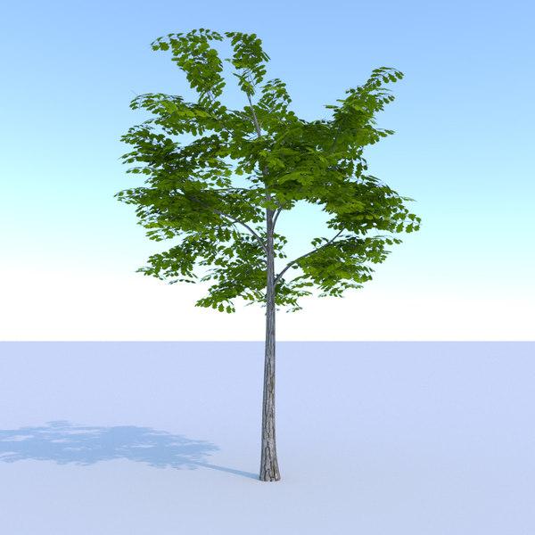 ready oak summer 3D model