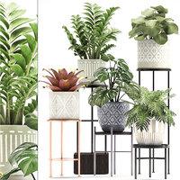 plants exotic model