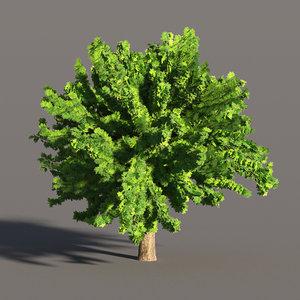3D maple tree model