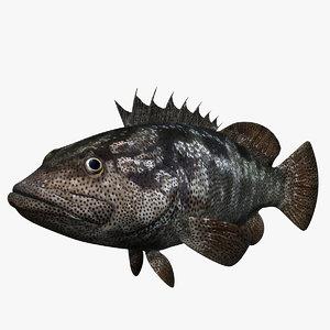 animal fish model