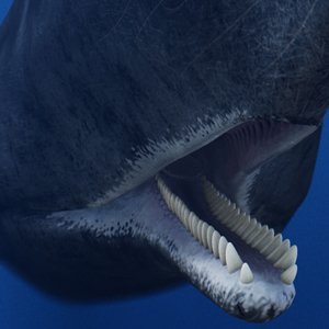3D sperm whale cachalot