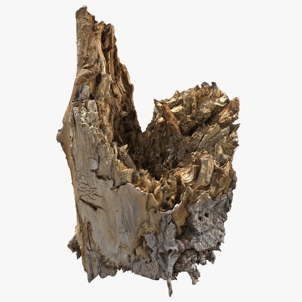 3D model tree bark scanned