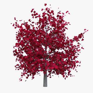 3D model red maple leaf