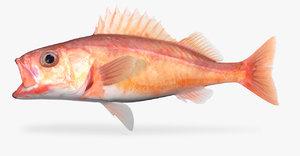 chilipepper rockfish 3D model