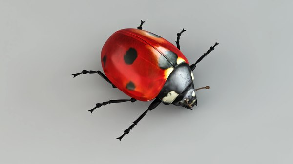 3D model ladybird lady r