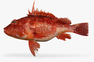 red scorpionfish 3D model