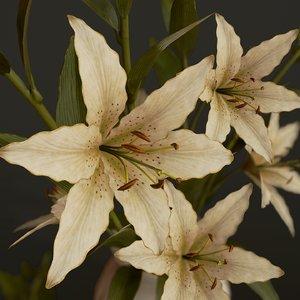 3D bouquet lilies ready pbr