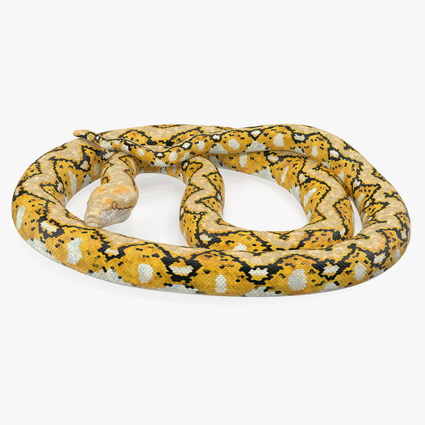 yellow python snake rigged 3D
