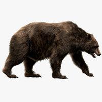 Bear (Fur) (Rigged)