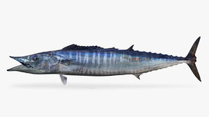 3D wahoo fish