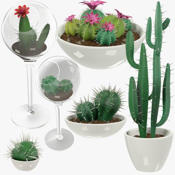 3D model cactuses pots cactus v1
