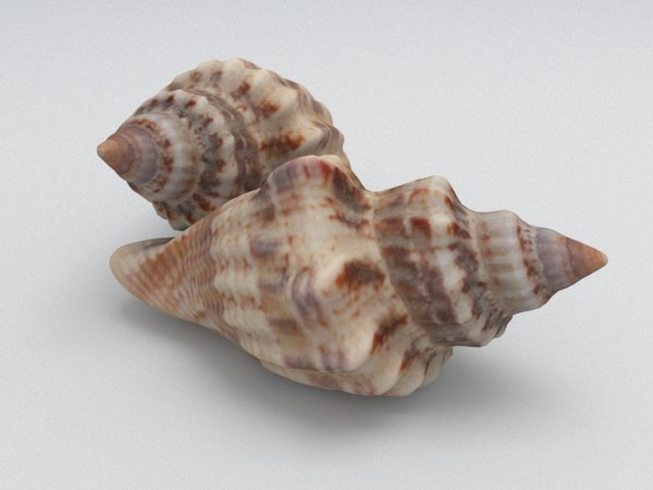 3D angular seashell
