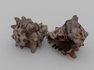 3D sea seashell
