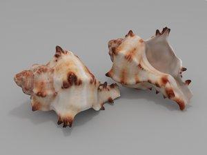 3D seashell sea