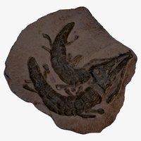 crocodile fossil aligator reptile 3D model