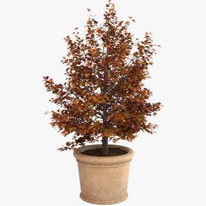 3ds max decorative pot plant
