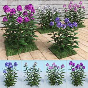 3D model garden phlox paniculata planting