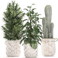 ornamental plants exotic 3D model