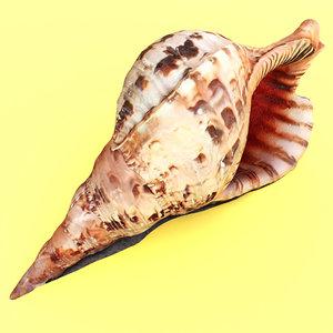 scan shells horn newt 3D model