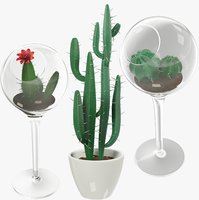Cactuses in Pot Collection V2