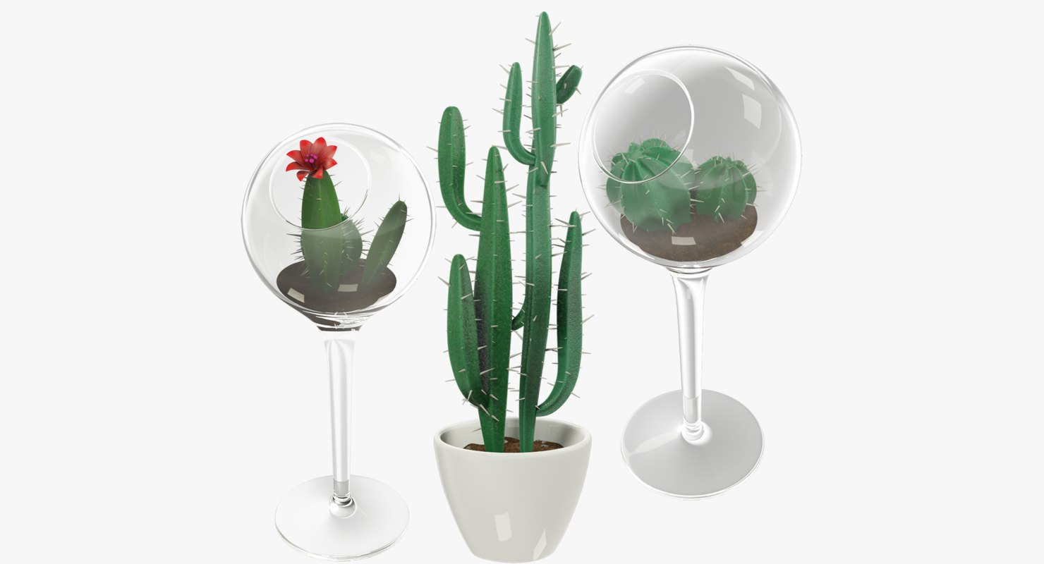 3D cactuses pots cactus model