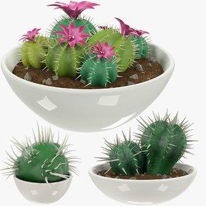 3D cactuses pots cactus v3 model