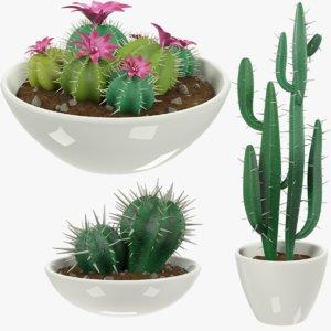 3D model cactuses pots cactus v4