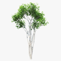 3D silk orange tree 02