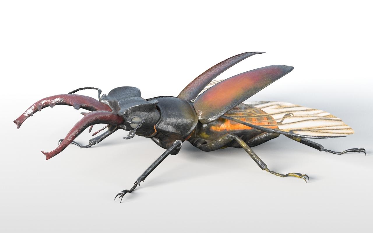 beetle stag bee model