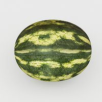 watermelon realistic 3D model