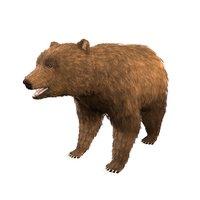 3D bear rigging blender