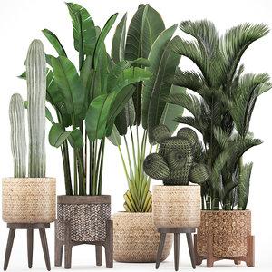exotic plants 3D