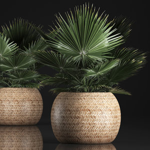 3D houseplants fan palm basket