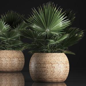 3D houseplants fan palm basket