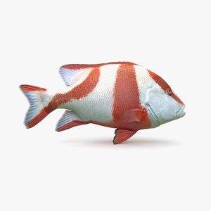 3D model red emperor snapper