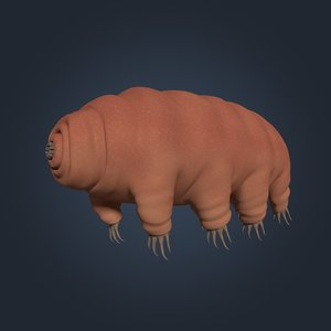 tardigrade anatomy model