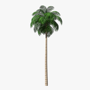 unreal palm leaf 3D