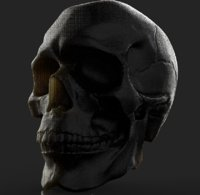 base anatomy skull 3D model