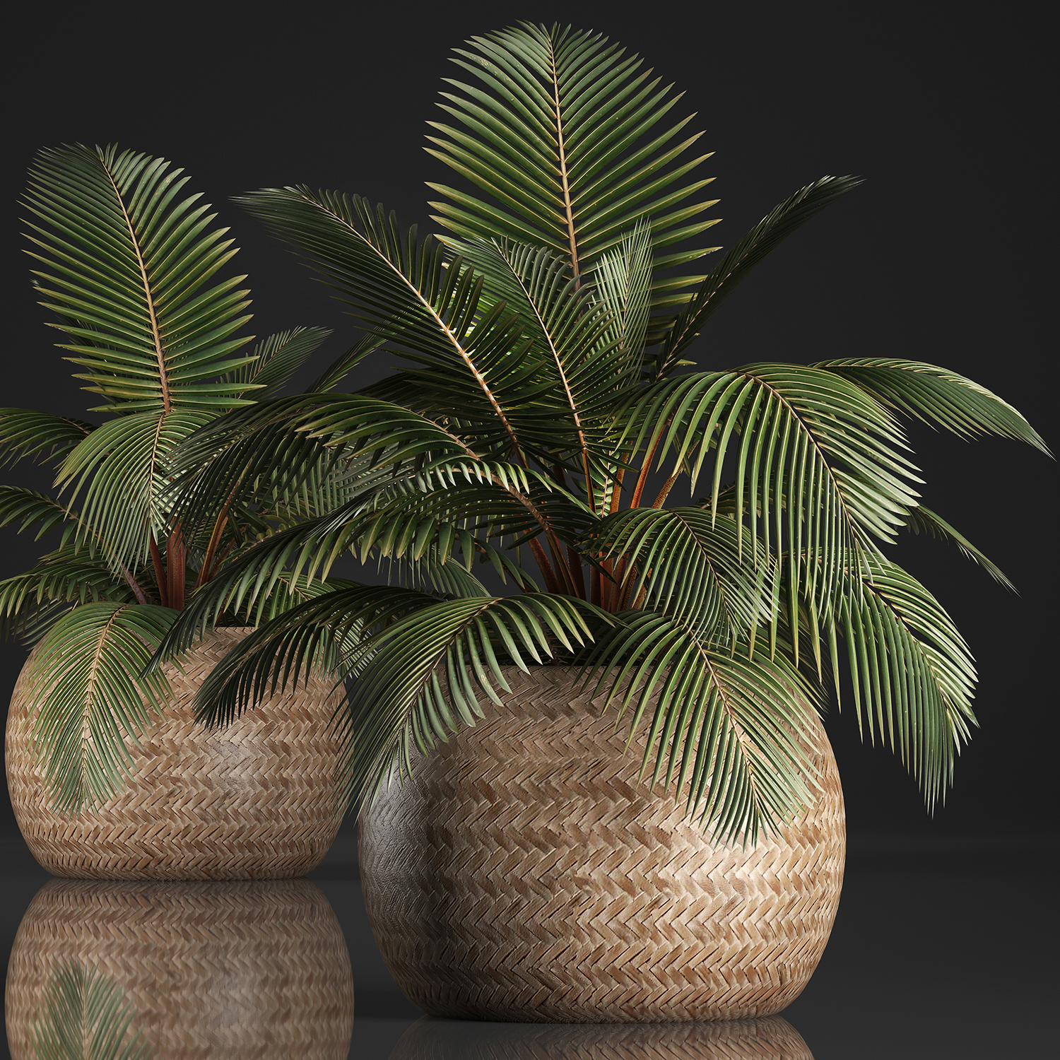 Decorative palm tree in the basket on palm leaf chickee, palm bamboo, palm pattern, palm border, palm vector, palm beetle, palm flowers, palm drawing, palm shrubs, palm bonsai, palm tr, palm seeds, palm christmas, palm shoot, palm trees, palm diagram, palm leaf cut out, palm chamaedorea seifrizii, palm roses, palm rats,