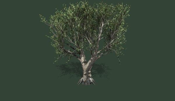 tree olive model