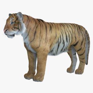 3D tiger fur model