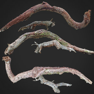 3D dead twisted tree scan