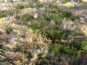 3D meadow plants ecosystems pack