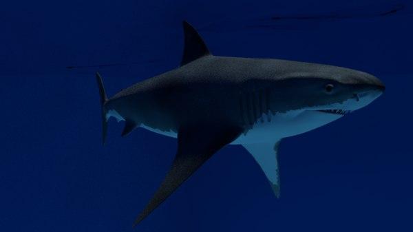 3D shark animations
