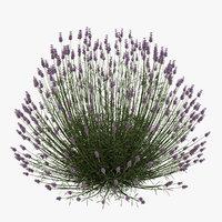 lavender plant 3D