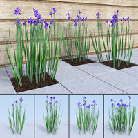 3D siberian iris sibirica landscape