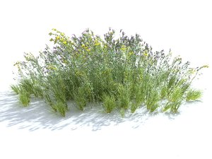 3D meadow plants ecosystems